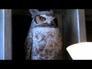 Совиная почта в Волшебном мире Гарри Поттера