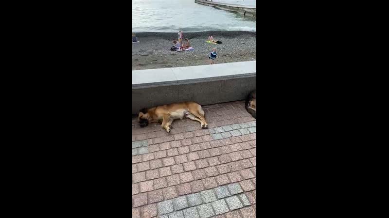 Бездомные собаки в Сочи