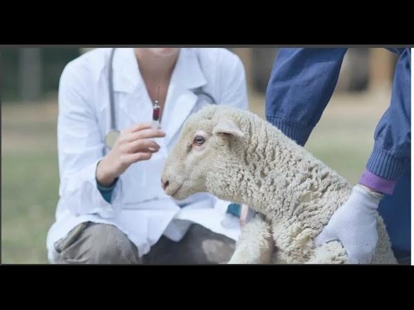 ВАКЦИНАЦИЯ Трансформация в тихих животных