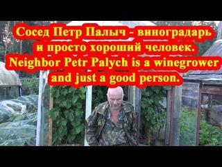 Сосед Петр Палыч - виноградарь и просто хороший человек. Видео на миллион просмотров.