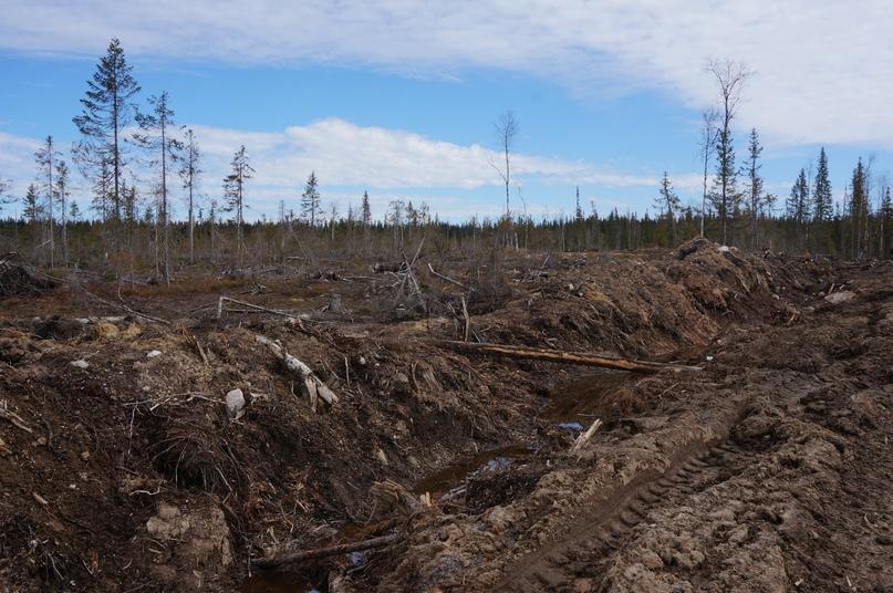 Свежая вырубка, Архангельска область