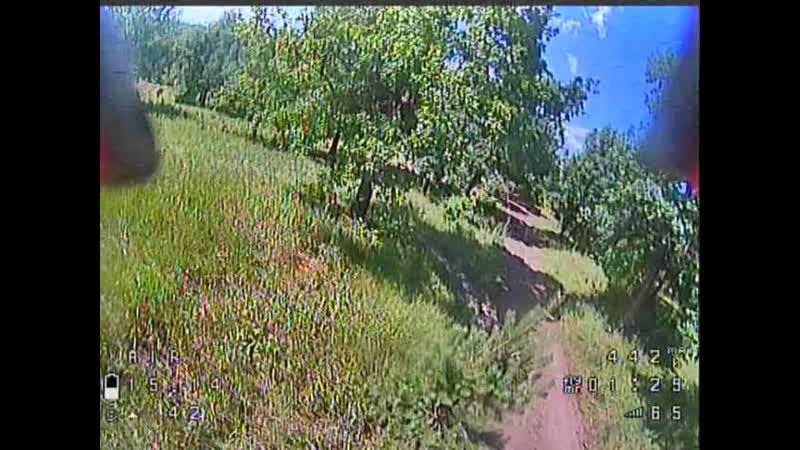Dron vs Woods