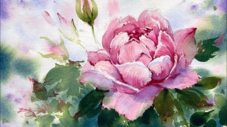 Watercolor Painting - England Rose- Not use Masking Fluid-Tutorial Step by Step
