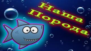 Аквариумная рыбка Горчак