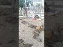 Azeri askerlerin eline geçen Ermeni kışlası