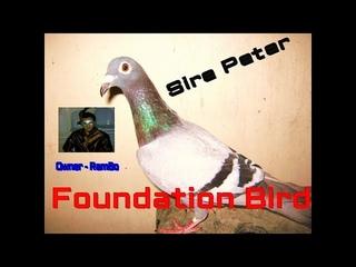 Sir Peter Foundation Brooder Cock (SI POGI MAHILIG sa CAMERA)