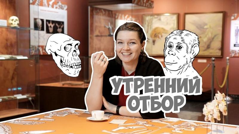 Утренний отбор Половые хромосомы древних людей Елена Сударикова