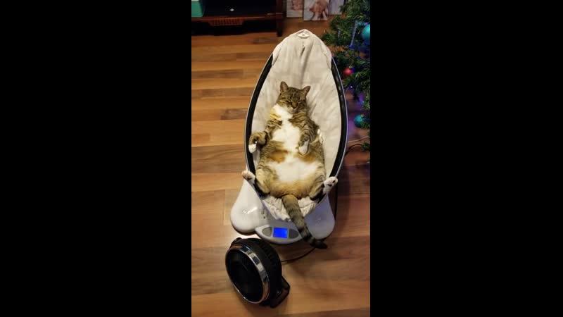 «Это предназначалось для нашего новорожденного...» Коту тоже приглянулась.