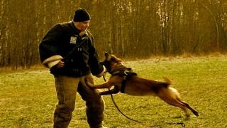 Врожденное поведение и обучение собак. Рабочие качества