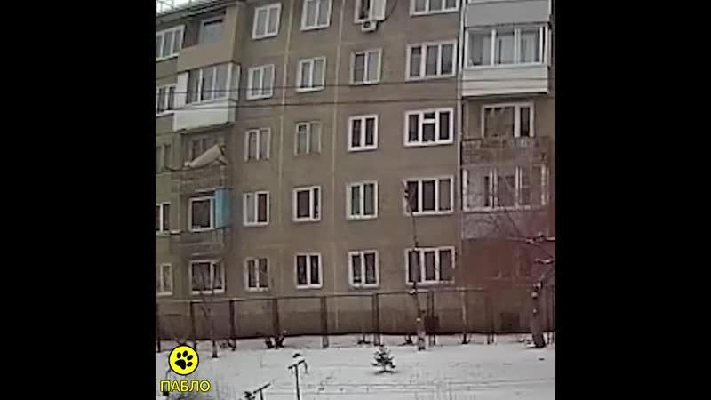 Выбросил той-терьера из окна пятого этажа