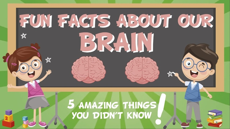 Our Brain AMAZING FUN FACTS | Educational Videos For Kids