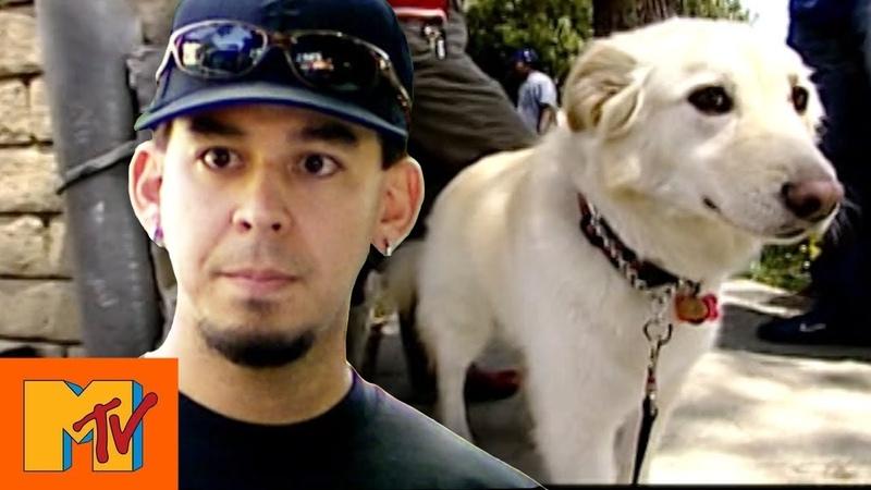 Linkin Park's Mike Shinoda Blocks Dog Rescue Punk'd