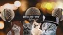 Little Big – UNO CATCOVER-Поющие коты