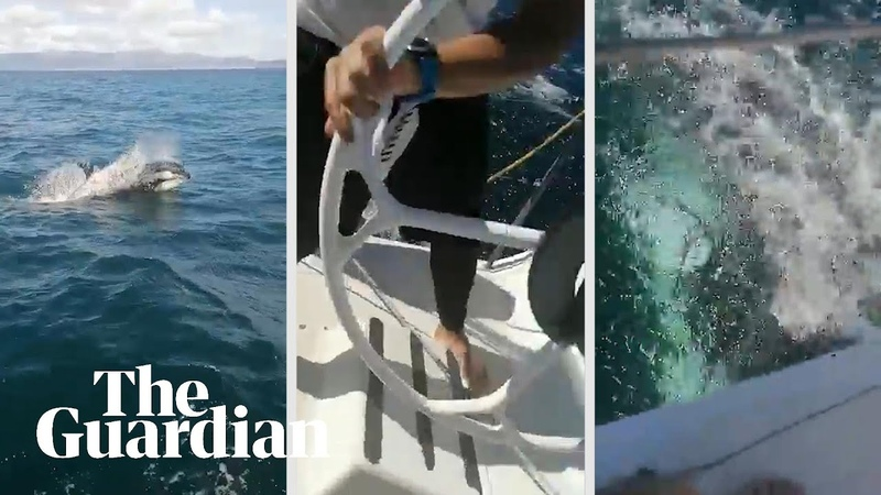 Orcas damage Spanish naval yacht It broke the rudder!