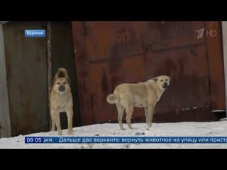 Участились случаи нападения бездомных собак налюдей вСаратове иБашкирии