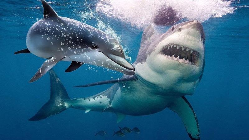 Вот Почему Акулы Боятся Дельфинов