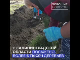 В рамках нацпроекта в Калининградской области высадили более шести тысяч деревьев
