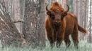 Природа Беларуси. Заповедными тропами белорусской земли. Документальный фильм | Film Studio Aves