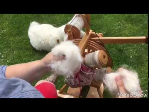 29 🐏 Hundewolle vorbereiten und spinnen
