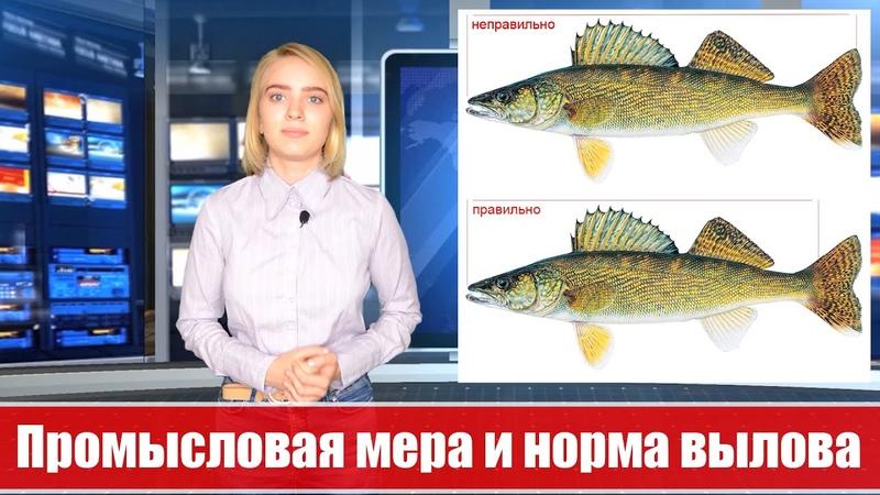 Промысловая мера и норма вылова рыбы в Беларуси