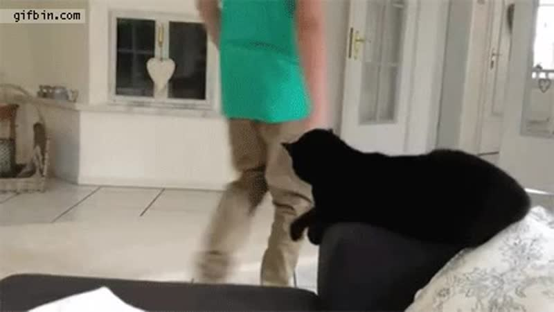Cat gives high five