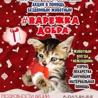 ВАРЕЖКА Добра: акция в помощь бездомным животным