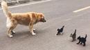「かわいい」10分間腹が痛いほど爆笑する犬 猫 動物のおもしろハプ 124