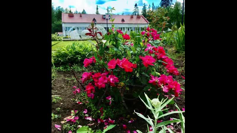 Бекасово цвет и ждет гостей