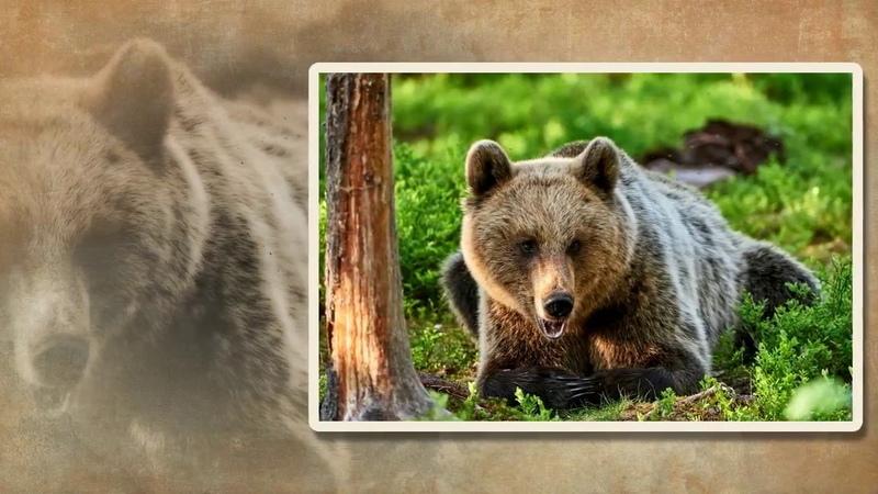 Медвежий характер - слайд для детей МСЦ ЕХБ скачан из сайта dstudio.info