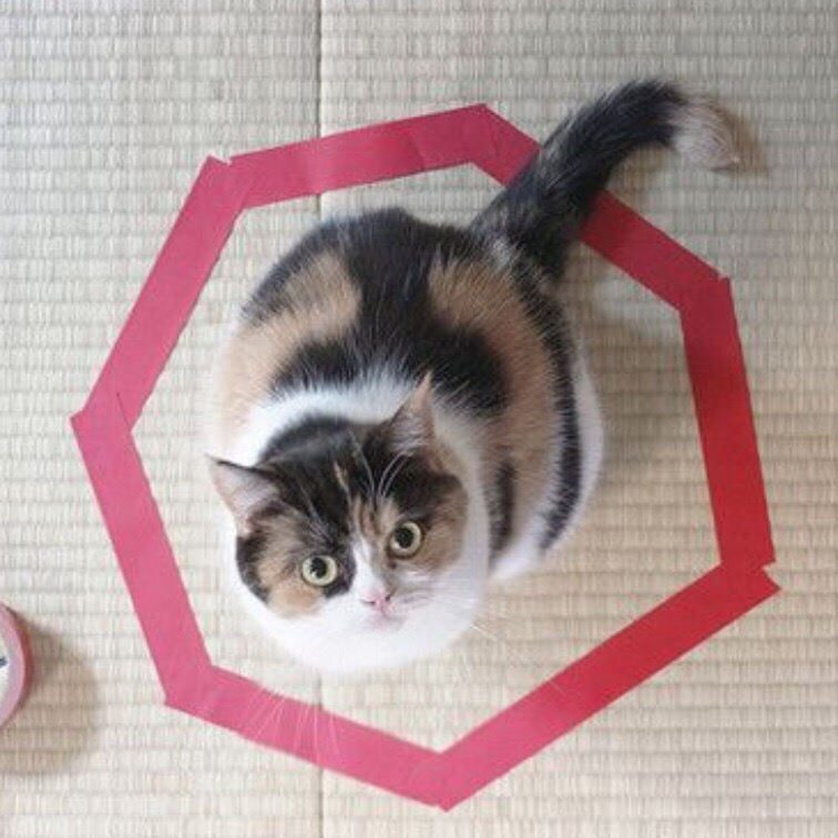 nHHsCCI6Ww - Новая фишка для котов