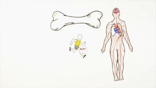 Познавательная анатомия. Кости. / Cognitive anatomy. Bones.