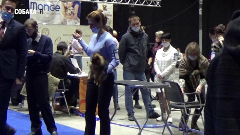 Шпиц померанский выставка собак Старая охота в Архангельске 29 11