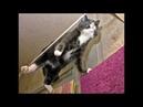Веселые картинки. Смешные коты кошки и котята.