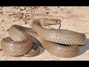 Дикая природа Австралии Самые опасные животные Австралии