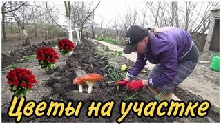 Кот Костик поймал мышонка, Соседка подарила много цветов, Цветочный рай на участке, Дом в деревне