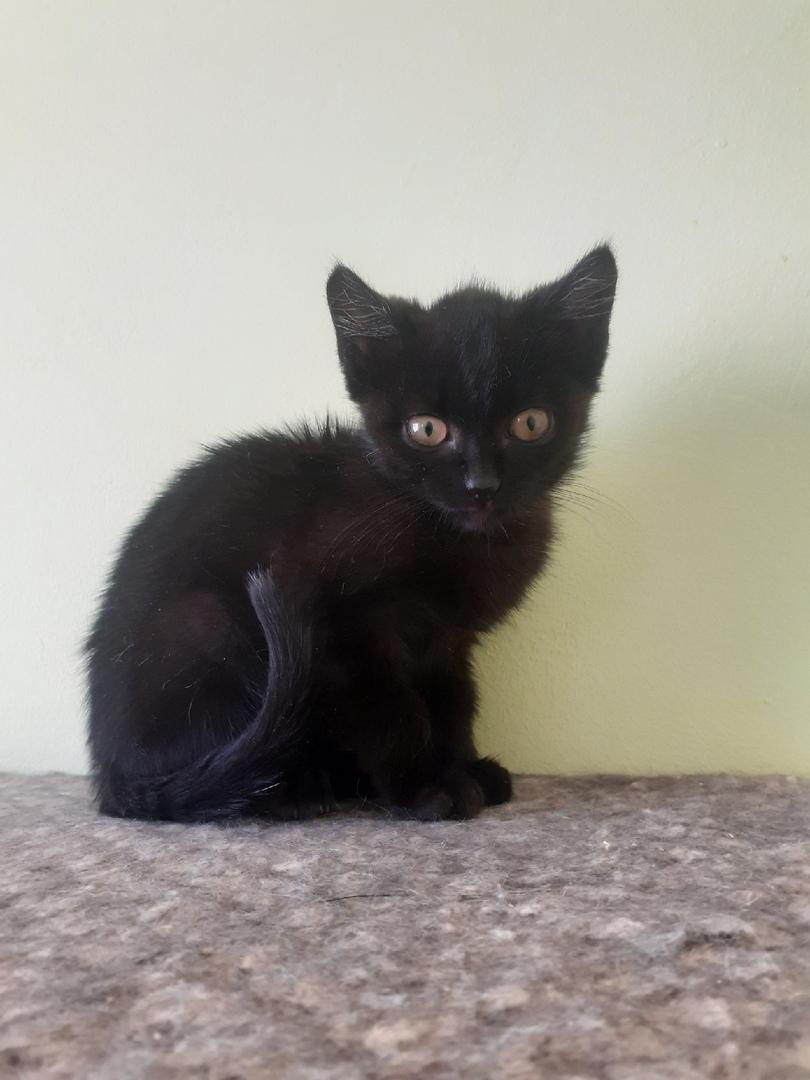 Котенок Чарлик ищет дом.