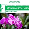"""Горшечные растения оптом ООО""""ЭН В ЭФ"""""""
