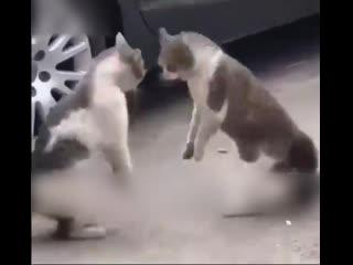 Да что ж там происходит? 😄