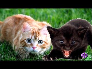 Сатана 15 «Нет, Сатана!» -  котята, оскалившись, прыгнули на Сатану. Бой был коротким, но жестоким