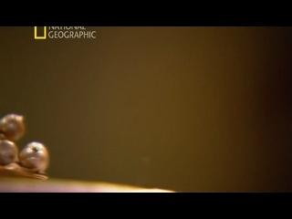 К Ф National Geographic Секретные материалы древности Святой грааль 2011