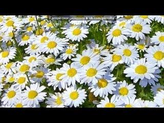 «Ромашки --цветы» под музыку Надежда Бабкина - Ромашки - цветы. Picrolla