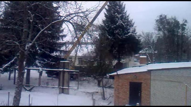 Козлу Баклыкову мало ёлок в лесу Херячит по городу