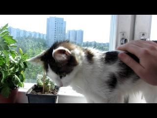 Котик радуется солнышку (тест canon sx220hs)