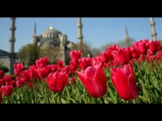VLOG in Istanbul. Фестиваль ТЮЛЬПАНОВ! tulip Festival\ LALE Festivali