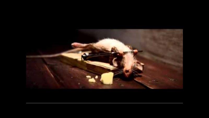 Реклама сыра Чеддер BY ASHOT