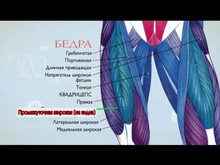 Анатомия. Экскурс по основным мышцам человека