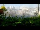 Городская ферма на крыше в Тель Авиве производит 10000 голов салата каждый месяц