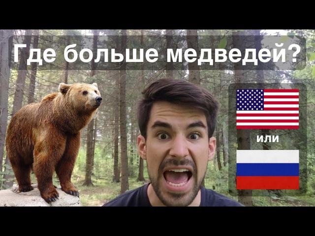 Где больше медведей в России или в Штатах