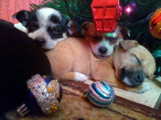 Puppies\Merry Christmas.