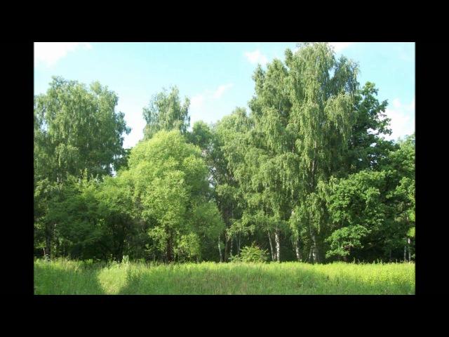 Adagio, композитор - Rolf Lovland, солист группы Secret Garden